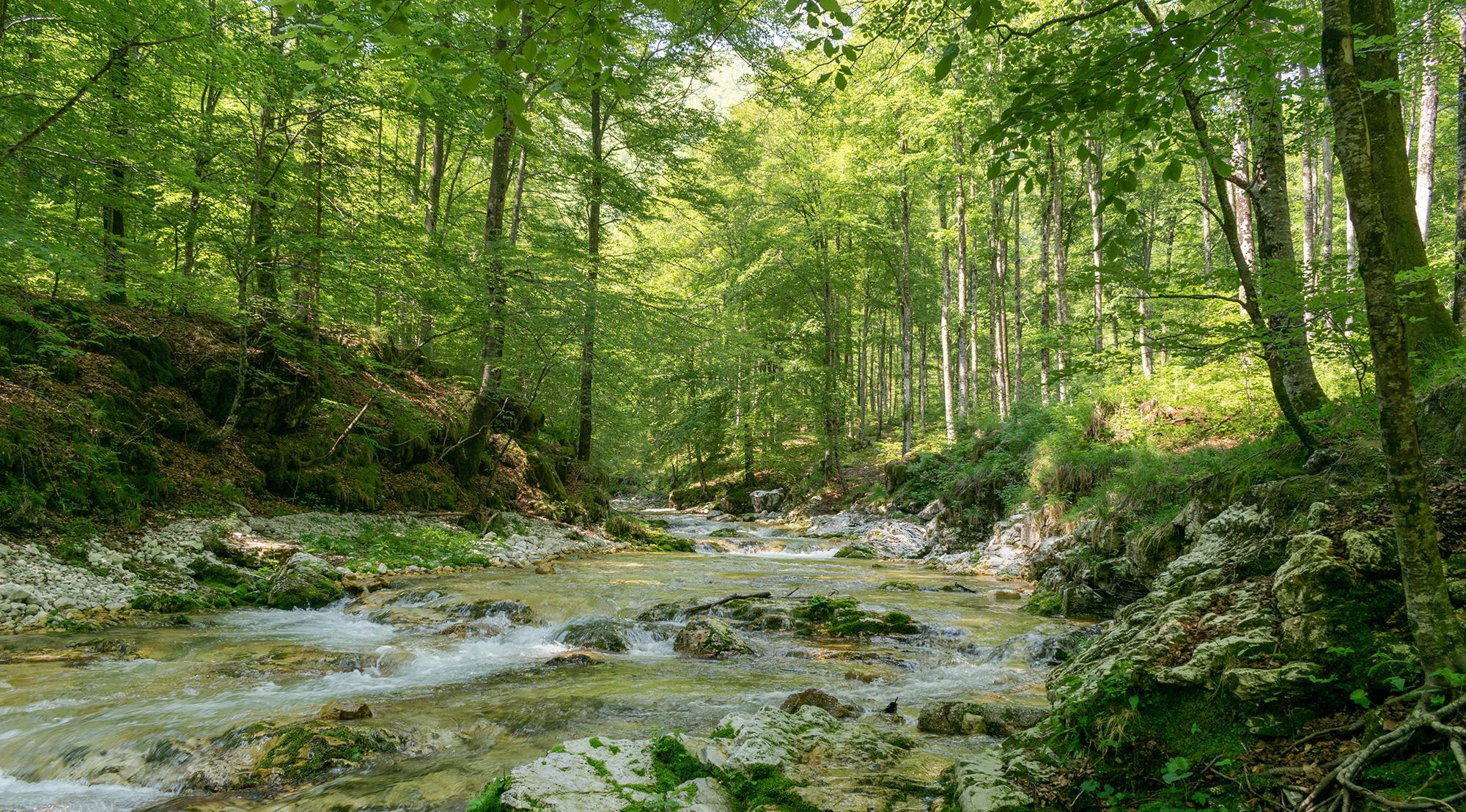 6 Agosto – Origine e cascatelle dell'Arzino – Preone
